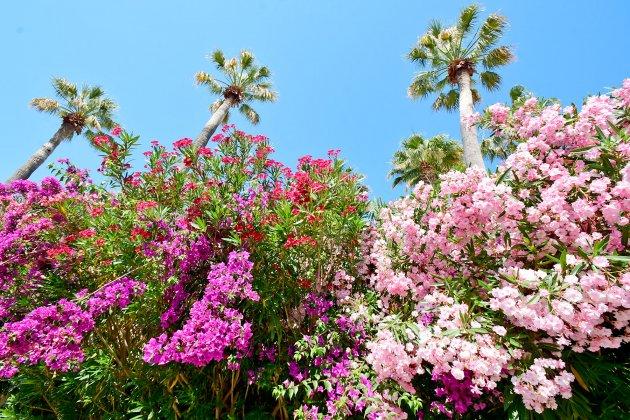 fleurs au camping la baume
